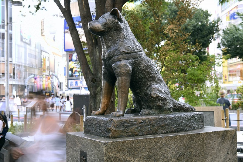 Why is there a Shibuya Dog Statue?